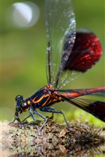 Preview iPhone wallpaper Dragonfly close-up, insect photography