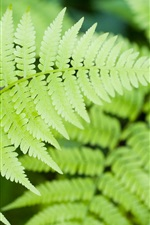 Preview iPhone wallpaper Fern green leaves close-up