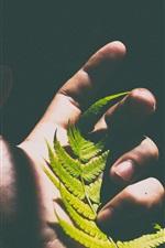 Folha de samambaia na mão