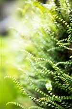 Preview iPhone wallpaper Fern leaves, bokeh, green