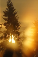 Preview iPhone wallpaper Forest, sun rays, morning, fog
