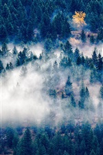 Preview iPhone wallpaper Forest, trees, fog, morning