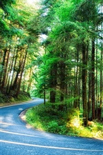 Preview iPhone wallpaper Forest, trees, road, light, Oregon, USA