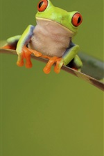 Preview iPhone wallpaper Frog, leaf, green background