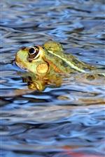 미리보기 iPhone 배경 화면 개구리는 물에서 수영한다.