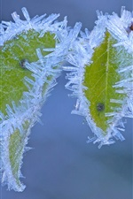 Preview iPhone wallpaper Frost, ice crystals, green leaves, winter