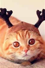 Gato engraçado, chapéu, chifres