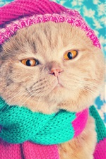 Preview iPhone wallpaper Funny cat, hat, scarf