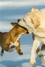 Preview iPhone wallpaper Funny picture, two dogs