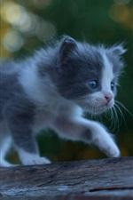 Preview iPhone wallpaper Furry kitten baby walk