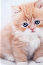 Preview iPhone wallpaper Furry kitten, cat baby