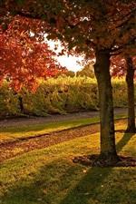 Preview iPhone wallpaper Garden, footpath, trees, grass, autumn, sunshine