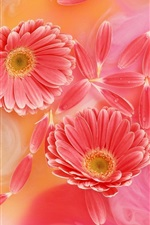 Preview iPhone wallpaper Gerbera pink petals, tenderness