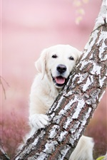 Preview iPhone wallpaper Golden Retriever and tree