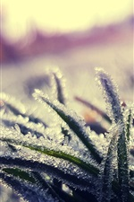 Grass, frost, ice crystals, cold