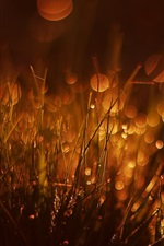 Preview iPhone wallpaper Grass, glare, bokeh