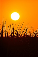 Preview iPhone wallpaper Grass, silhouette, sunset, orange sky