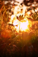 Preview iPhone wallpaper Grass, sun, glare, summer
