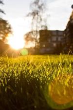 Grass, sun rays, glare