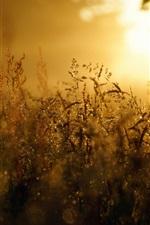 iPhone fondos de pantalla Hierba, puesta de sol, deslumbramiento