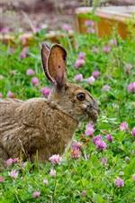 Preview iPhone wallpaper Gray rabbit, grass, flowers