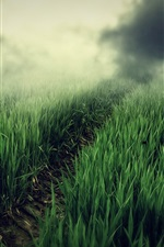 Green fields, fog