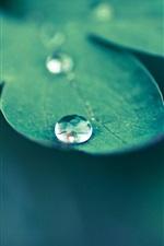 미리보기 iPhone 배경 화면 녹색 잎 매크로 사진, 이슬
