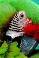 Preview iPhone wallpaper Green parrot close-up, beak