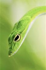 Preview iPhone wallpaper Green snake, bokeh