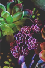 Preview iPhone wallpaper Houseplants, colorful leaves, succulents