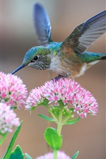 Preview iPhone wallpaper Hummingbirds and pink flowers