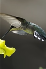 Preview iPhone wallpaper Hummingbirds and yellow flower