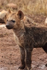Preview iPhone wallpaper Hyena cub close-up