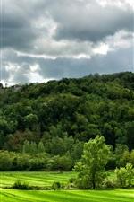 Itália, greenfields, colinas, capim, campos, árvores