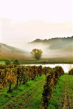 Preview iPhone wallpaper Italy, vineyard, pond, slope, fog