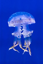 Preview iPhone wallpaper Jellyfish at underwater, tentacles, blue sea