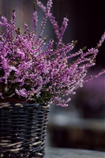 Lavender flowers, basket, blurry background