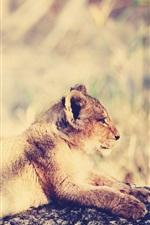 Preview iPhone wallpaper Lion cub rest