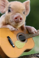 Preview iPhone wallpaper Little pig and guitar