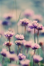 Preview iPhone wallpaper Little purple flowers, field, grass