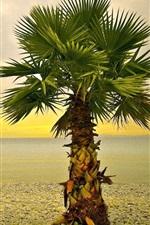 iPhone обои Одинокая пальма, пляж, камни