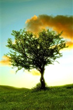 Preview iPhone wallpaper Lonely tree, grass, clouds, sunshine