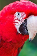 Preview iPhone wallpaper Macaw, parrot, beak, branch