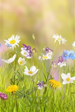 Preview iPhone wallpaper Many kinds flowers, colorful colors, grass