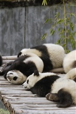Preview iPhone wallpaper Many panda babies sleeping