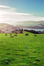 Preview iPhone wallpaper Meadow, cows, city, river, sunrise