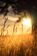 Preview iPhone wallpaper Morning, grass, sunlight, sunrise
