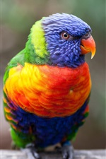 Preview iPhone wallpaper Multicolor parrot, beak, eye