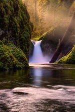 Preview iPhone wallpaper Nature, forest, trees, waterfall, creek, moss