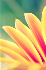 Preview iPhone wallpaper Orange petals flower close-up